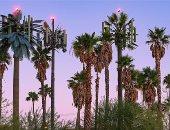 شجرة ونخلة وتمثال كمان.. محطات إرسال الموبايل فى أمريكا شكل تانى..ألبوم صور