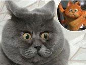 جارفيلد الحقيقى.. علامات الذهول تجعل قطا روسيا نجم سوشيال ميديا.. صور