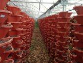 الزراعة الذكية.. 4 قراريط تعطى إنتاجية فدان وتوفر 80% من المياه.. فيديو
