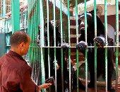 شاهد آخر مغامرات الدب هاني وزوجتيه سماح ونيفين بحديقة الحيوان قبل نفوقه