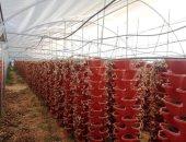 تعزيز القطاع الزراعى لخلق الاستثمارات المختلفة.. نجاح قوى للدولة خلال 7 سنوات