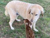 كلب ينقذ غزال من الغرق ويصبح حديث السوشيال ميديا .. صور