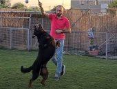 كلاب بتتشرس وبتتدرب على الطاعة.. شوف خطوات ترويض الكلاب