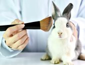 مكياج من غير دم.. كيف تختبر علامات التجميل مستحضراتها دون إيذاء الحيوان؟
