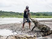 رجل يجذب السياح فى كوستاريكا بإطعام التماسيح بيدين عاريتين