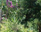 """أكبر مشتل حكومى بـ""""أزهر أسيوط"""".. يضم 2000 نوع من نباتات الزينة والعطرية والطبية"""