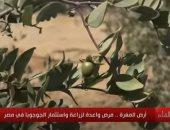 """البحوث الزراعية: مصر الخامسة عالميا فى المساحات المنزرعة بـ""""الجوجوبا"""""""