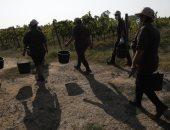 مدينة إيطالية تحظر العمل فى أيام الحر الشديد بعد وفاة مزارع