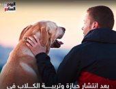 حيازة كلب بدون ترخيص.. حبس وغرامة من 50 لـ100 ألف جنيه.. فيديو