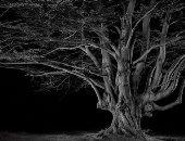 أشبه بأفلام الرعب.. سحر الغابة البريطانية والمستنقعات في الليل.. ألبوم صور