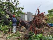 اقتلاع أشجار وهدم منازل.. العاصفة إلسا تتحول إلى إعصار على سواحل فلوريدا