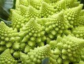 """علماء يكشفون سر الشكل المذهل لنبات """"البروكلى الرومانسكى"""".. البراعم تفشل فى التطور"""