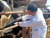 بيطرى الشرقية: فحص واختبار 7079 رأس ماشية ضد أمراض البروسيلا والدرن