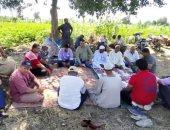 زراعة كفر الشيخ تنظم ندوات إرشادية لرفع إنتاجية القطن والأرز