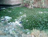 مزارعو قرية ميت غزال فى الغربية يشكون من جفاف الترعة.. رئيس المدينة يستجيب
