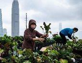 حدائق في السماء.. 60 مزرعة في هونج كونج  فوق ناطحات السحاب..ألبوم صور