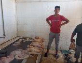 """طريقة سلخ وتنظيف الكوارع والممبار و""""الكرشة"""" بمجزر كفر الشيخ.. لايف وصور"""