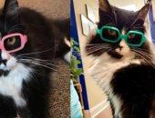 قطة ملهمة تلعب دورا محوريا لمساعدة طبيبة عيون فى علاج الأطفال.. صور