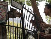 رحلة كل الناس.. إقبال كبير على حديقة الحيوانات فى أول أيام عيد الأضحى