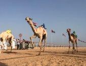 تنظيم ثانى سباق لهجن محافظات مصر بمدينة العلمين الخميس المقبل