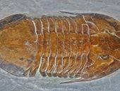 """اكتشاف بقايا متحجرة لـ""""ثلاثية الفصوص"""" نجت بأعجوبة من هجوم عقرب قبل 450 مليون سنة"""