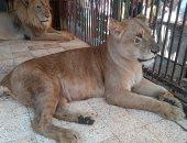 جولة داخل حديقة الحيوان بكفر الشيخ فى اليوم الرابع لعيد الأضحى المبارك.. لايف