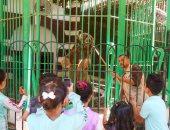 المصريون يودعون إجازة عيد الأضحى بالتزاحم على حديقة الحيوان