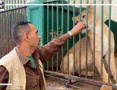 """غرام الأسود.. قصة حب وصداقة بين الحارس والأسد """"جوليا"""".. فيديو"""