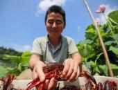 استاكوزا صينى.. مهرجان جراد البحر فى بكين من المزارع إلى أفضل طهاة العالم.. ألبوم صور