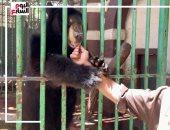 """بس متقولش حيوانات.. طرائف مضحكة فى حديقة حيوان الجيزة """"فيديو"""""""