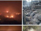 وكالة إيطالية: أوروبا تعلن عن تقديم مساعدات لإيطاليا للتعامل مع حرائق الغابات