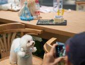 افتتاح أول مطعم للحيوانات الأليفة في مدينة شنجهاي بالصين .. صور