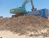 حصاد 20 ألف فدان بنجر السكر غرب المنيا ضمن مشروع 1.5 مليون فدان.. فيديو وصور