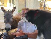 احتفال ساخر لـ أرنولد شوارزنيجر فى عيد ميلاده الـ74 بصورة مع كلبه وحمار