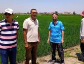 زراعة الشرقية: تنفيذ المدارس الحقلية للنهوض بمحصول الأرز بمركزى أبوكبير وكفر صقر