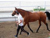 نايل نصار يمارس تمارين الإحماء مع حصانه فى أولمبياد طوكيو 2020