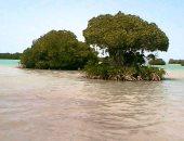 جمال أشجار المانجروف على سواحل جنوب البحر الأحمر فى 15 صورة بديعة