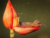 شوف الزهور واتعلم.. مصور طيور يوثق لقطات ساحرة على أغصان الأشجار.. ألبوم صور