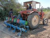 زراعة الوادى الجديد تعلن الانتهاء من زراعة 34736 فدان ذرة شامية