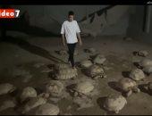 حكاية طالب ثانوى يمتلك أكبر مزرعة سلاحف فى مصر.. أرخص سلحفاة بـ100 دولار