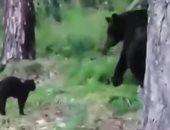 """قط يواجه """"دب"""" فى الغابة لحماية صاحبه.. اعرف القصة"""
