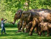 مسيرة الفيل تصل لندن.. 100 تمثال منحوت احتجاجا على مصير أكبر حيوانات الأرض.. ألبوم صور