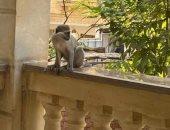 """حدائق الحيوان: """"هناك من يربى حيوانات دون إخطارنا ولما تتوحش يتخلص منها"""""""