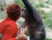 حديقة حيوان تمنع سيدة من زيارة شمبانزي لعلاقتها الوثيقة معه .. اعرف السبب