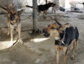 """اليوم العالمى للسعار.. 10 حيوانات تنقل المرض القاتل للإنسان الكلب و""""الخفاش"""" أخطرها.. بيطريون: الخوف الشديد من المياه والهلاوس أبرز أعراض الإصابة.. و""""فاو"""": 40% من ضحاياه أطفال ونجحنا فى توفير التطعيم مجانا"""