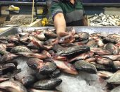 الجمبرى بـ120 جنيها والبلطى بـ15.. جولة داخل سوق السمك بالإسماعيلية.. فيديو
