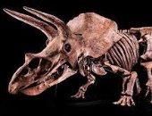 بيج جون.. عرض أكبر هيكل عظمى لديناصور للبيع فى مزاد بـ2 مليون دولار.. صور