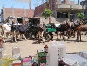 قافلة بيطرية لتوقيع الكشف على رؤوس الماشية بزفتى فى الغربية