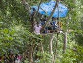 التعليم فوق الشجرة.. سيريلانكا تجهز فصولا دراسية للتلاميذ فوق الأغصان