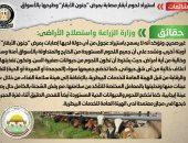 """أخبار مصر.. الحكومة تنفى استيراد لحوم أبقار مصابة بمرض """"جنون الأبقار"""""""